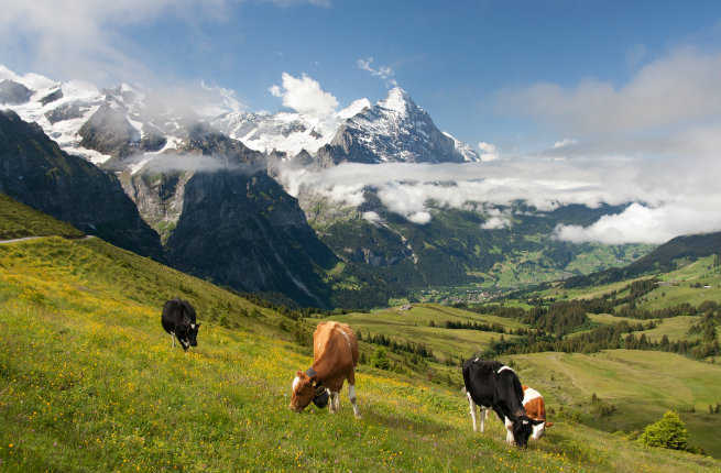 Top 12 Things to Do in Switzerland