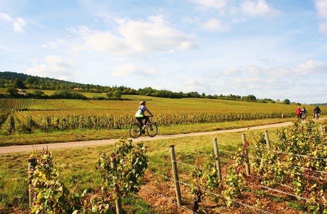 Touring Vineyards By Bike