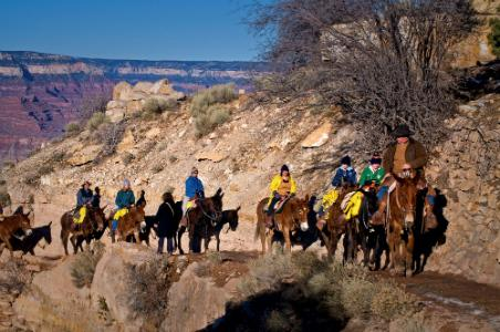 Mule ride into the Grand Canyon