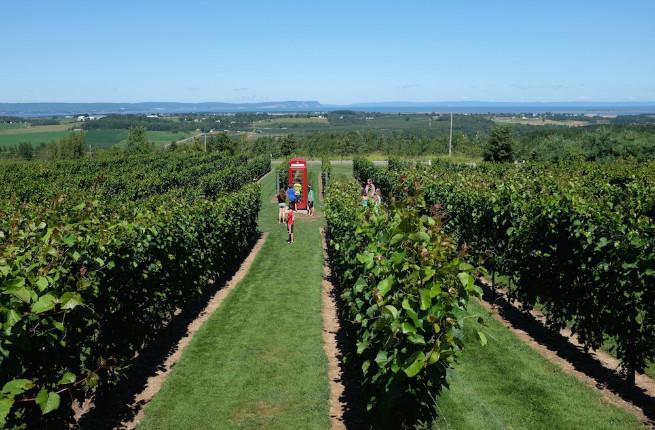Nova Scotia vineyards