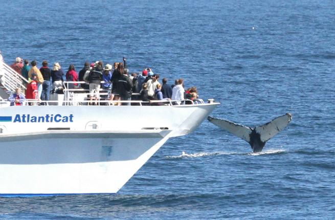 Bar Harbor whale watching