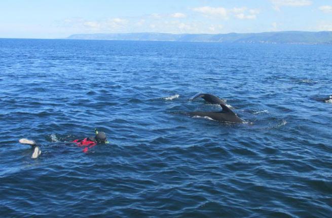 Cape Breton Island whales