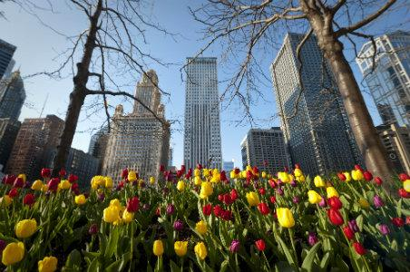 Spring 2014 Guide to Chicago