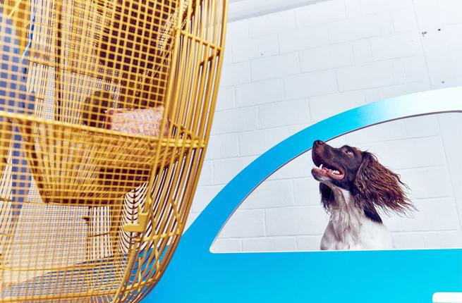 Art Exhibit Curated Just for Dogs