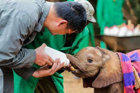 Yao Ming feeding a baby elephant