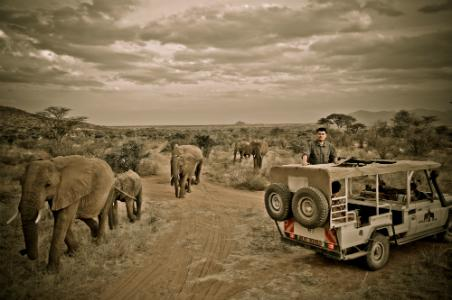 Yao Ming surrounded by elephants