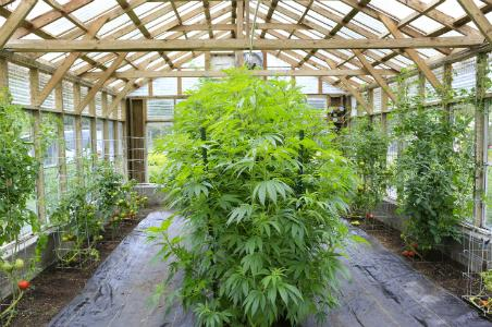 How to Buy Pot in Washington State