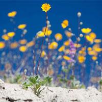 042010_parkflowers.jpg