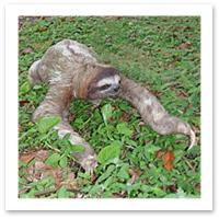 042809_sloth.jpg