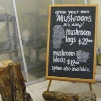 050410_mushroomfarm.jpg