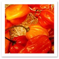 052009_peppers.jpg