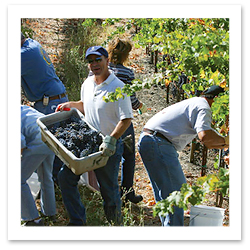 070718_sonoma_county_wine_campF.jpg