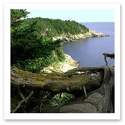 080115_Cape_Breton_flickr_Jurek%20Durczak.jpg