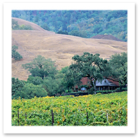 080128_S.%20Greg%20Panosian_carneros_wine_country.JPG