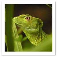 Costa Rica Ecolodges - La Selva Biological Station