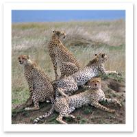 081114_hyenas.jpg