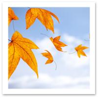 090209_foliage.jpg