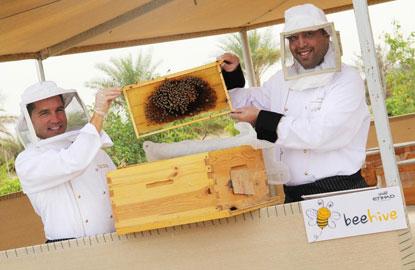 1-Etihad-Bees.jpg