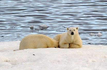 1-compagnie-du-ponant-polar-bears.jpg