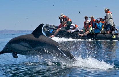 1-lindblad-dolphin-zodiac.jpg