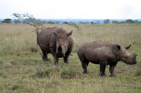 1.%20Naorobi-National-Park-kenya.jpg