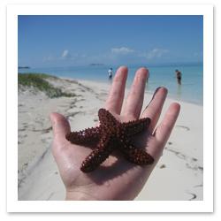 16%20Starfish.jpg