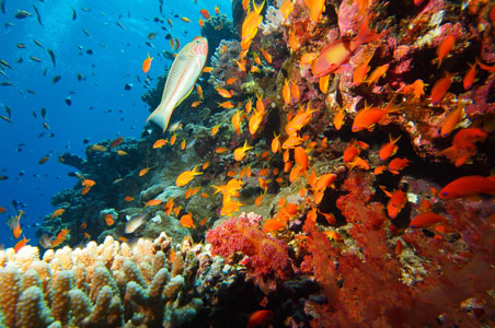 2-coral-reef-red-sea.jpg