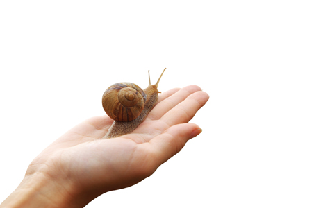 2-snail-facial.jpg