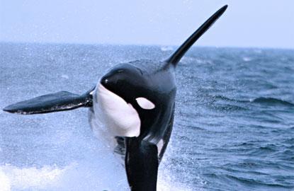 2-whalewatching.jpg