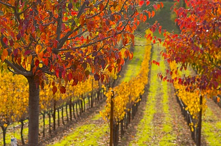 2.%20sonoma-honeymoon-fall_resized.jpg