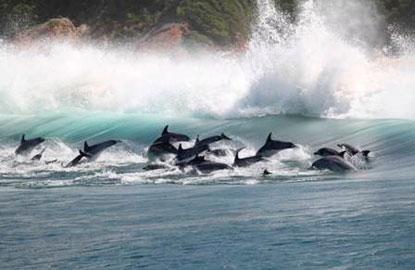 2_dolphin-watching.jpg