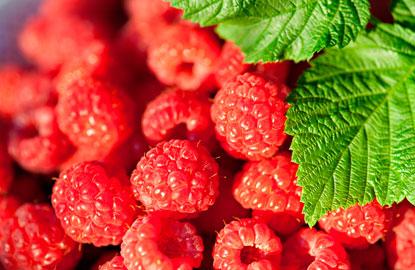 2_raspberries.jpg