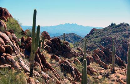 3-Arizona.jpg