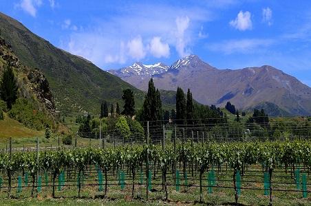 3-Brennan-wines-vineyard.jpg