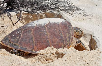 3-adopt-turtle.jpg