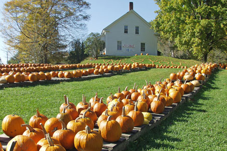 3-pumpkins-vermont.jpg
