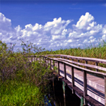 The Top 6 Experiences in Florida's Everglades