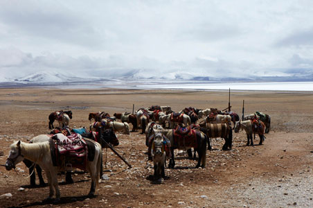 3b-Tibet_Namtso-horses.jpg