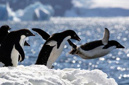 4--Aberkrombie-Kent-Penguins.jpg
