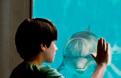 4-celebrity-dolphin.jpg
