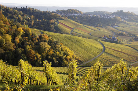 4-stuttgart-wine-germany.jpg
