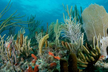 5-Lauderdale-By-The-Sea.jpg