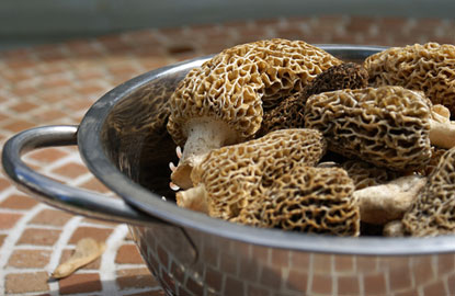 5-Morel-Mushrooms.jpg