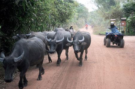 5-atv-tour-cambodia.jpg