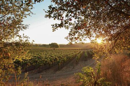 5-rv-vineyard-sonoma.jpg