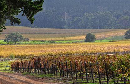 5-south-africa-wine.jpg
