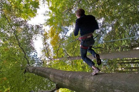 6-tree-climbing.jpg