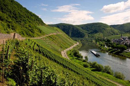 German Wine Regions 101
