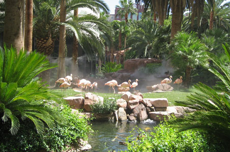 Where to See Wild Animals in Vegas