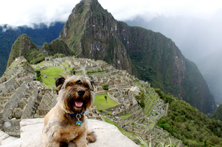 Meet Oscar the (Cutest Ever) Traveling Dog (PHOTOS)